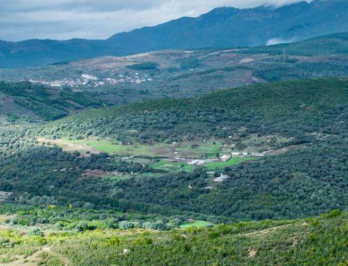 Descubriendo la Sierra de Francia en Casas rurales Arroal, turismo activo, gastronomía y naturaleza