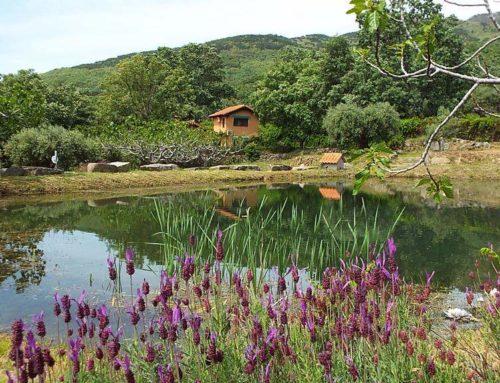Hotel Rural El Camino en Candeleda (Ávila) un paraíso por descubrir