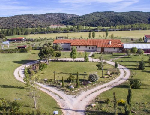 Hotel Bioclimático Sabinares del Arlanza, un paraíso para toda la familia en Burgos