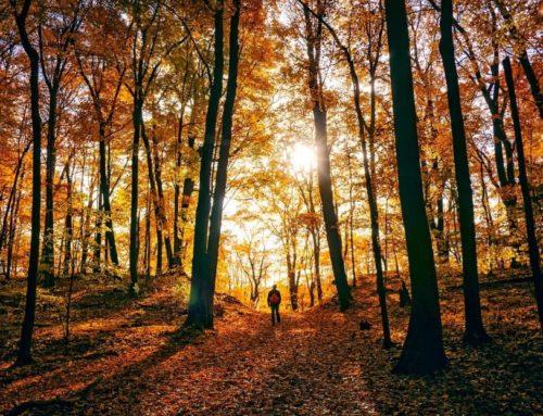 5 planes para este otoño en Castilla y León