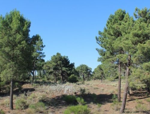Ruta entre dunas por el pinar de las Arenas