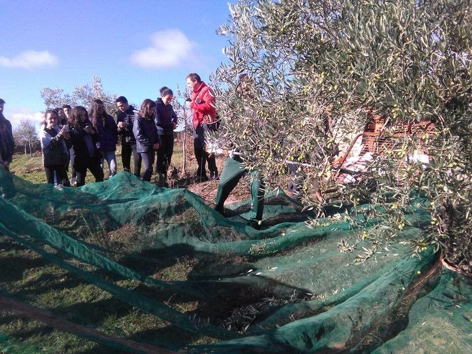 Oleoturismo en Castilla y León