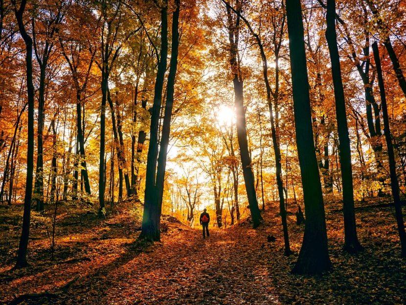 Planes para este otoño en Castilla y Léon